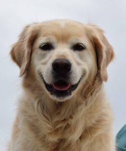 International Dog Day 2021 : इस तरह के नस्ले के जानवर भारतीय जलवायु के लिए उपयुक्त होता है।
